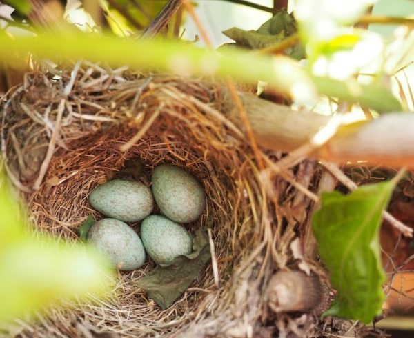 3 Tips for Starting (and Adding to) a Small Business Financial Nest Egg bird eggs in a nest