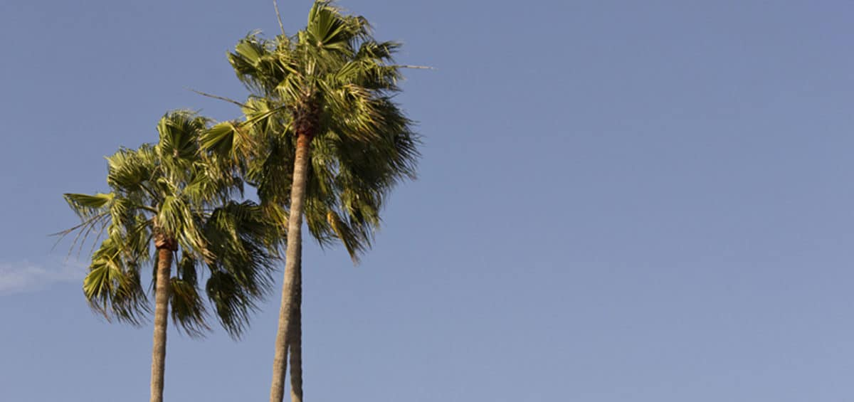 Why Ventura County is a Great Place to Grow Your Business palm trees against a blue sky